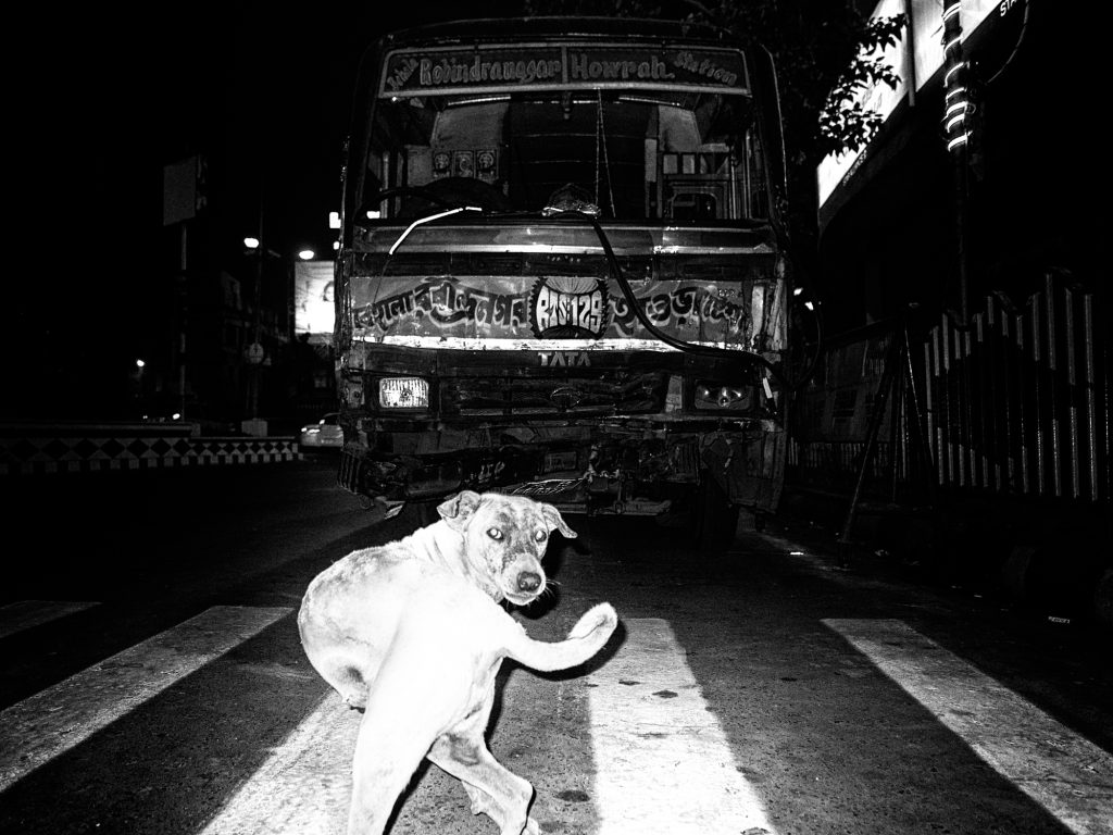 Street photgraphy dog of kolkataa