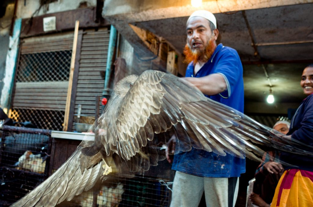 street photography of ahmedabd eagle